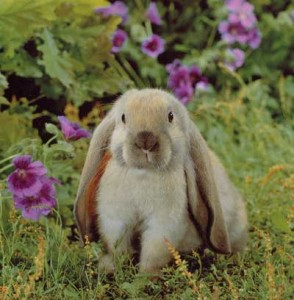 bunnyrabbit 294x300 May 31, 2012: No Tobacco Day, Complete Sentence Day, Positive Thinking Day, Macaroon Day